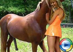 Pferd fickt frau